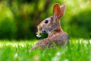 kaninchen-wildnis
