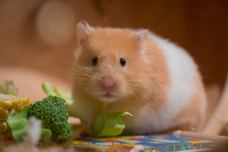 hamsterkaefig-hamster-haltung