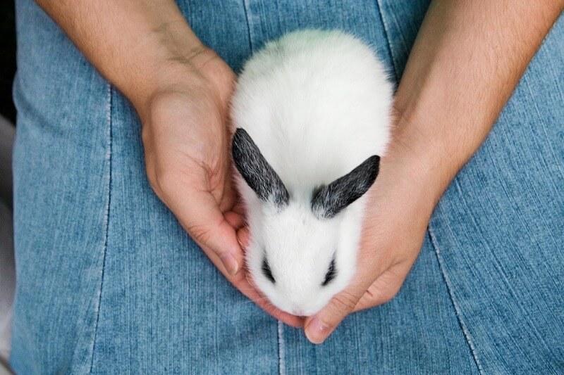 kaninchen-krallen-schneiden